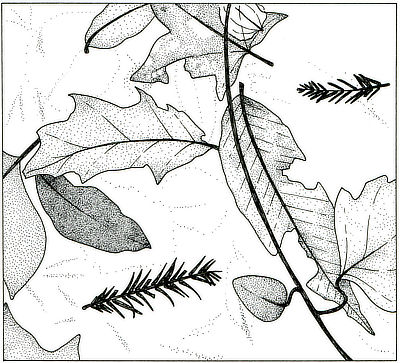 Figure 3.59: A slab of leaves from the Clarkia flora, about 13 centimeters (5 inches) across.