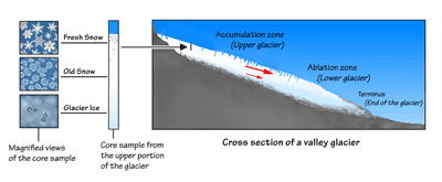 Figure 6.2: Cross section of an alpine (valley) glacier showing snow being converted into glacial ice and the two major zones of a glacier's surface. The red arrows show the direction and relative speed of different parts of the glacier. The longer the arrow, the faster the ice is moving.