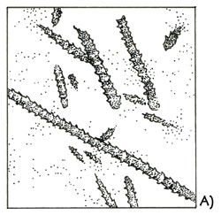 Rock with many fragments of <em class='sp'>Climacograptus</em> colonies.