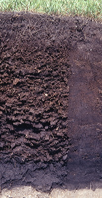 Figure 8.19: An example of a Histosol soil. These soils are rich in organic matter and are often referred to as peats, bogs, or mucks.