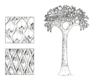 Figure 3.24: <em class='sp'>Lepidodendron</em>. Left: close-ups of leaf scars on the trunk. Right: reconstruction of the entire tree, which reached 30 meters (100 feet) in height.