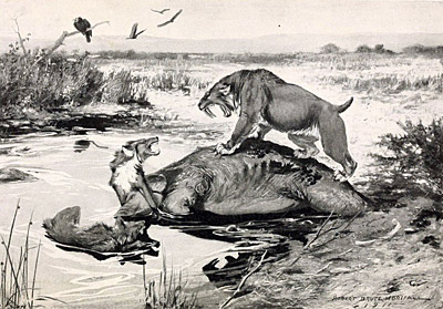 Figure 3.31: A 1911 illustration of several mammal species becoming mired in the tar pit&mdash;<em class='sp'>Smilodon fatalis</em> and <em class='sp'>Canis dirus</em> fight over a <em class='sp'>Mammuthus</em> corpse.