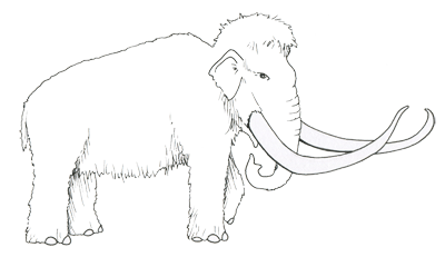 Figure 3.29: A Pleistocene woolly mammoth, <em class='sp'>Mammuthus primigenius</em>.