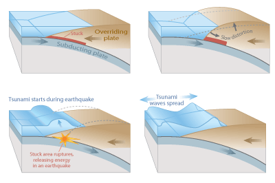 Figure 10.10: The steps involved in a megathrust earthquake and tsunami.