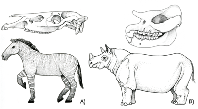 Figure 3.62: Fossil mammals from the Miocene Ogalalla Group of Kansas and Oklahoma.