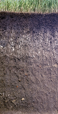 Figure 8.16: An example of a Mollisol soil. These soils have a rich, dark surface horizon and are high in organic matter content.