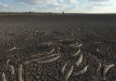 Figure 9.14: Dead fish rot on the cracked lakebed.