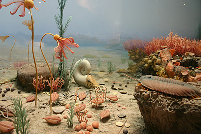 Figure 9.3: Life in the Silurian reefs.