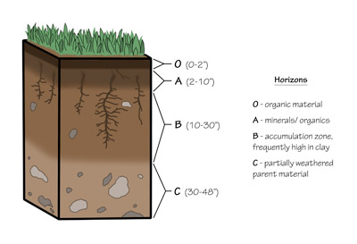 Figure 8.3: A typical soil profile shows the transition from the parent material (horizon C and the bedrock below it) to the highly developed or changed horizons (O through B). Not every soil profile will have all the horizons present.