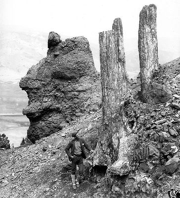 Figure 3.58: Specimen Ridge, overlooking the Lamar River, Yellowstone National Park, Wyoming. These fossil tree trunks are preserved in the position they occupied when they were alive, around 48 million years ago during the Eocene epoch, before they were buried suddenly in a volcanic eruption. This photo was taken around the year 1887. Note man standing at bottom for scale.