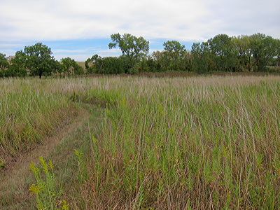 Figure 8.17: Tallgrass Prairie National Preserve near Strong City, Kansas. This type of grassland is a typical environment for the formation of Mollisols. Today, most of it has been converted for use in agriculture.