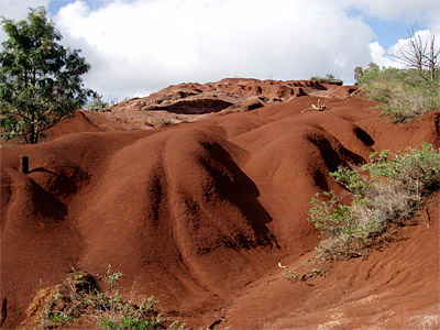Figure 8.2: A highly weathered Oxisol, west Kaua'i. Chemically this soil consists primarily of aluminum, iron, and titanium oxides and hydroxides. Erosion, probably caused by overgrazing, has led to a loss of organic matter at the surface. This soil has a low water-holding capacity, is highly acidic, and has very low nutrient content. These harsh conditions have prevented recolonization by plants.